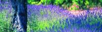 cropped-provence-ii-foto-divulgac3a7c3a3o-atout-france