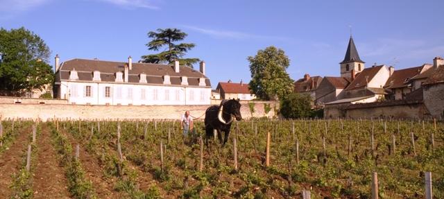 Domaine Liger-Belair, na Bourgogne: tratores banidos
