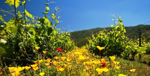 Corredor biológico da vinícola Emiliana: proteção natural