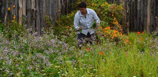 Chef Rodolfo Guzmán, do Boragó, colhendo plantas